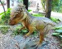 Pachycephalosaurus(AD-220)