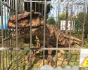 Dinosaur in Cage(AD-229)
