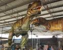 Testing for a 15 meters Tyrannosaurus model