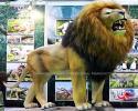 Lion(AA-1504)