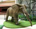 Elephant(AA-1505)