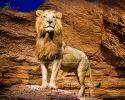 Lion(AA-1507)