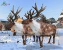 Reindeer(AA-1542)