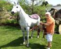 Horse(AA-1545)