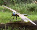 Dragonfly(AI-1719)