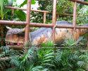 Carnotaurus(AD-035)