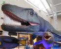 Mosasaurus(AM-2112)