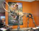 Mastodon Skeleton(SR-2016)