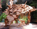 Ankylosaurus Skeleton(SR-2026)